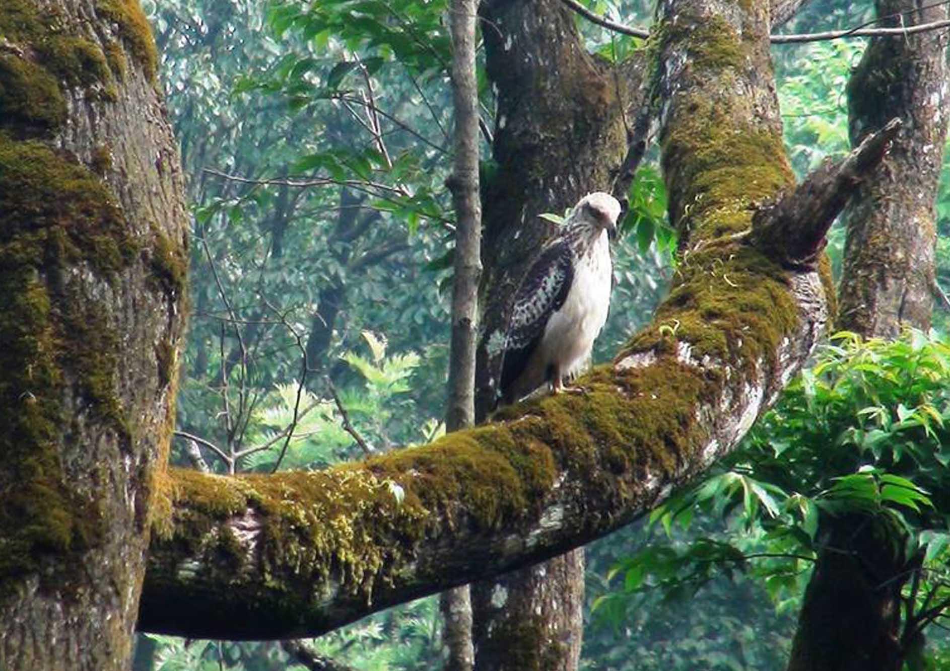 unique-bird-at-the-tamara-coorg